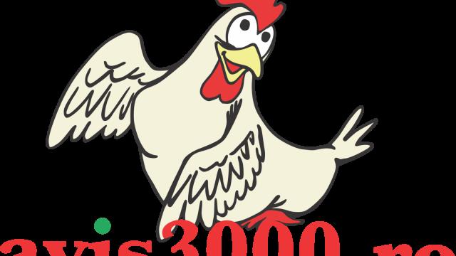 Avis 3000